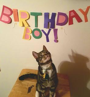 birthday cat profile photo