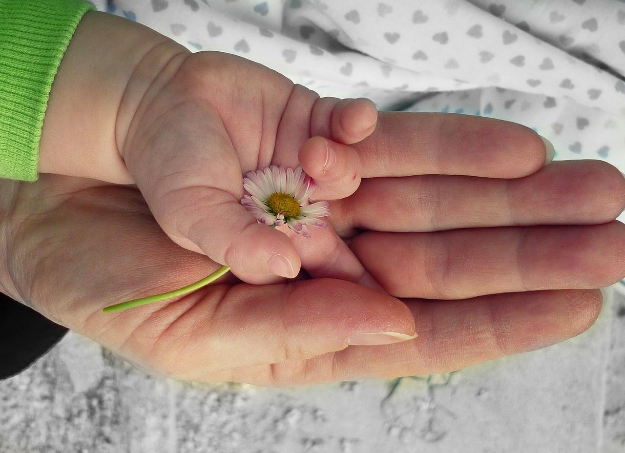 Kinderhand mit Gänseblümchen