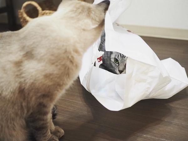 袋の中と外から見つめ合う2匹の猫