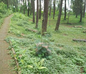 area-camping-gorun-tebing-keraton-bandung-notes-asher