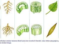 √ 14 Perbedaan Gymnospermae & Angiospermae Beserta Contoh