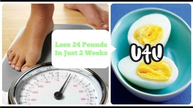 egg, egg diet