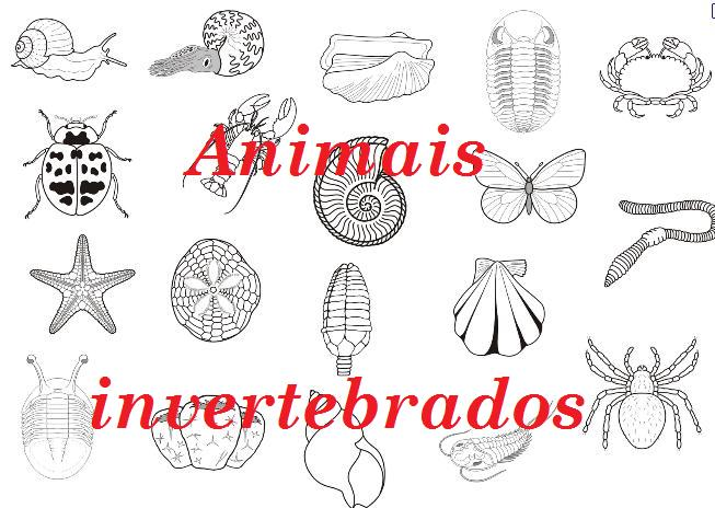 Dibujos De Animales Vertebrados E Invertebrados Para Colorear E