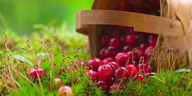 minuman pembakar lemak dengan cepat, susu penurun berat badan dengan cepat, makanan yang dapat menurunkan berat badan secara drastis, minuman pembakar lemak saat tidur, susu penurun berat badan wrp, minuman diet tradisional, penurun berat badan tercepat, minuman diet malam hari, jus cranberry beli dimana, nama lain buah cranberry di indonesia, jus cranberry diamond, jus cranberry carrefour, jus cranberry untuk wanita hamil, jus cranberry untuk isk, cara membuat jus cranberry, harga buah cranberry,