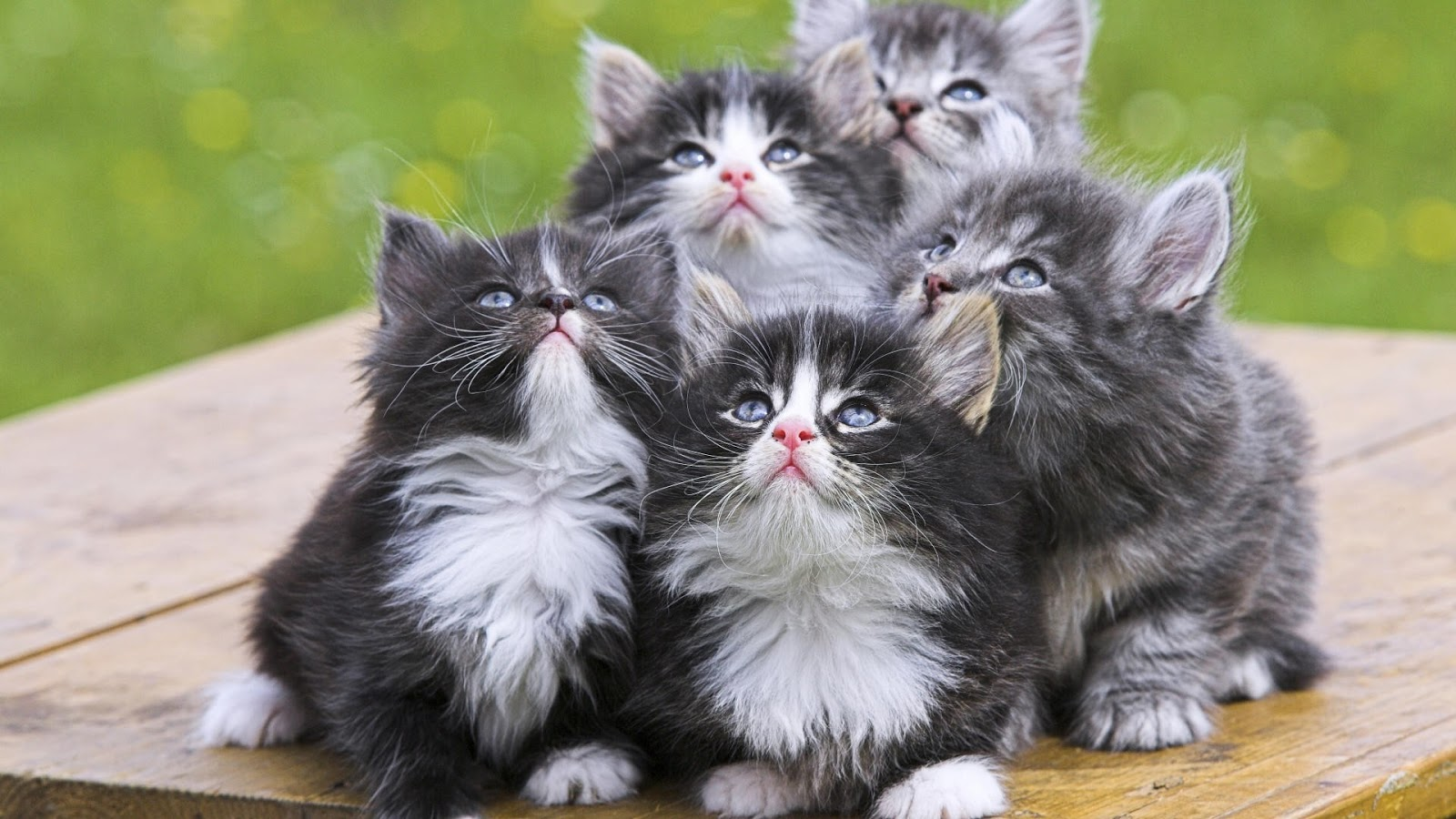 Beautiful Acterss Wallpapers Hd Beautiful Cats Wallpapers