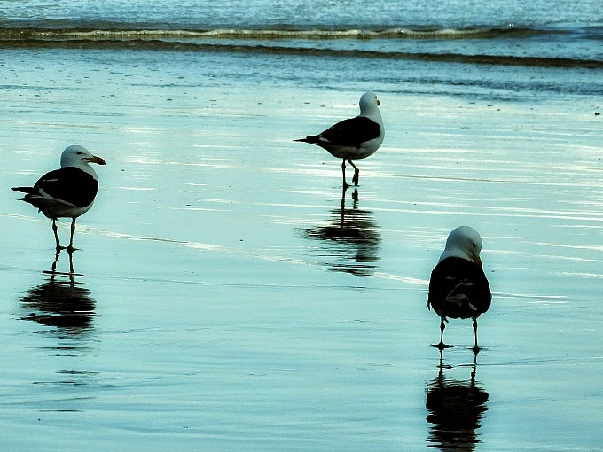 Aves na beira da Praia de Naufragados [no Extremo Sul de Florianópolis].