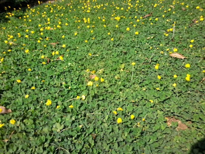 Bunga Merambat Di Tanah Panduan Tentang Tanaman Bunga Dan Buah