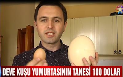 Devekuşu yumurtası tanesi 100 dolara satılıyor