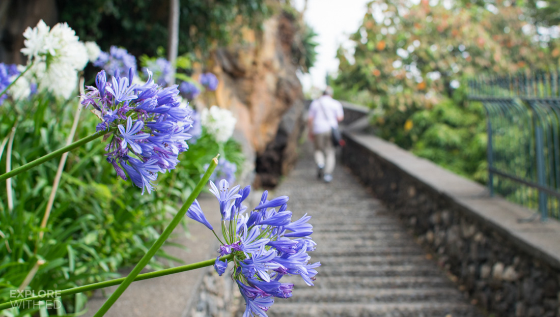 Flowers in Funchal Madeira