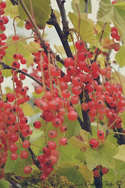rosendals trädgard