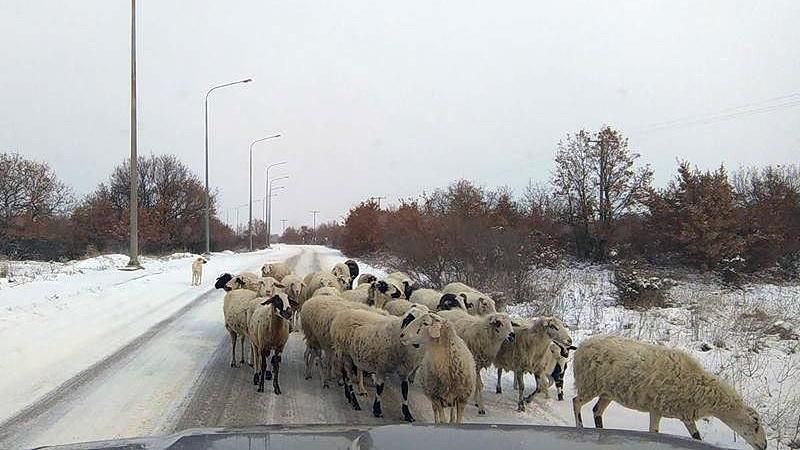 Κοινοβουλευτική παρέμβαση του ΚΚΕ για την αποζημίωση των κτηνοτρόφων του Έβρου για τις ζημιές που υπέστησαν από τον χιονιά