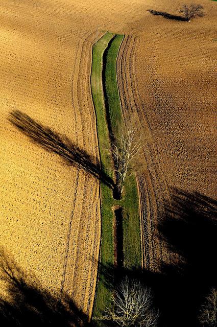 arbre dans les champs suivant une ligne