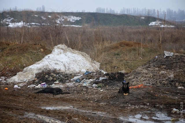 фото убитой собаки