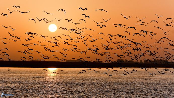 Bandadas de pájaros al atardecer