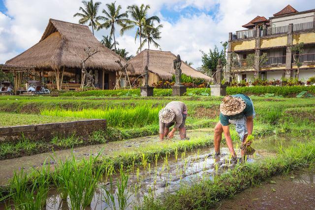 Desa Ubud Bali