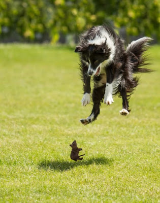 Funny Mouse Scares Dog Picture