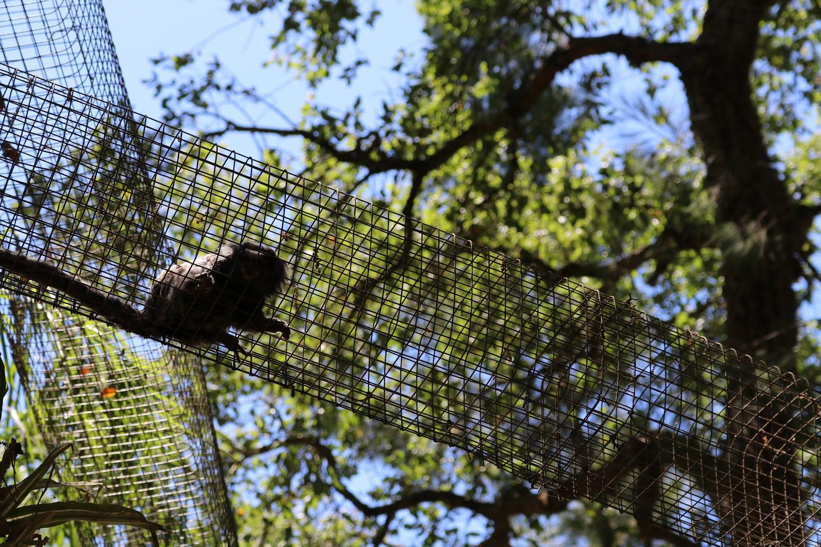 a monkey in Zoo De Castellar, Spain