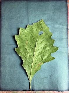 Wet cyanotype_Sue Reno_Image 449