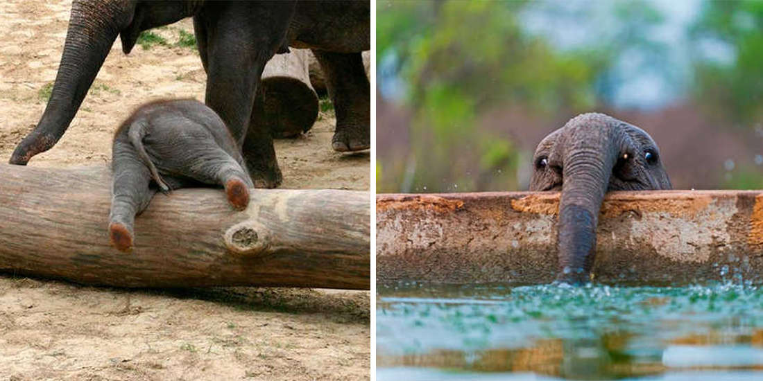 These 10 Beautiful Pictures Of Baby Elephants Are The Cutest Thing We Saw Today