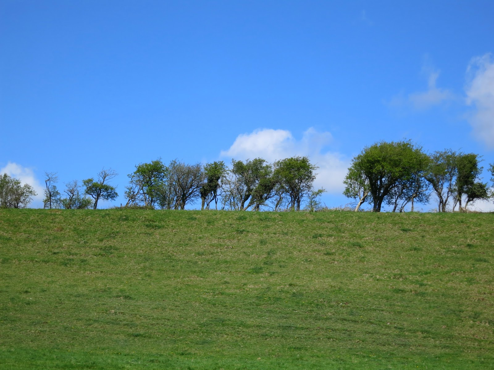 A row of trees along the top of a grassy hill in front of blue sky.