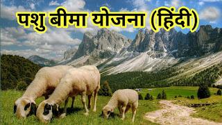 Livestock Insurance Scheme