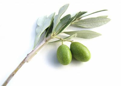 Extrato de oliveira no controle da hipertensão
