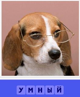на собак одеты очки и выглядит умной в них