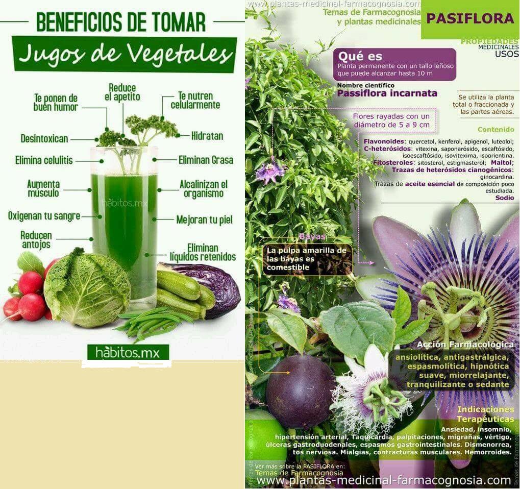 Verduras sin acido urico leer m s art culos gu as consejos m dicoss - Alimentos prohibidos con acido urico ...