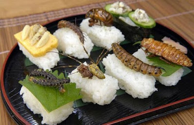 rice insects