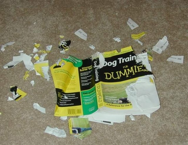 Dog Training For Dummies Book