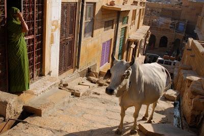 Jaisalmer, la dorée : les temples Jains et le Thar Heritage Museum 39
