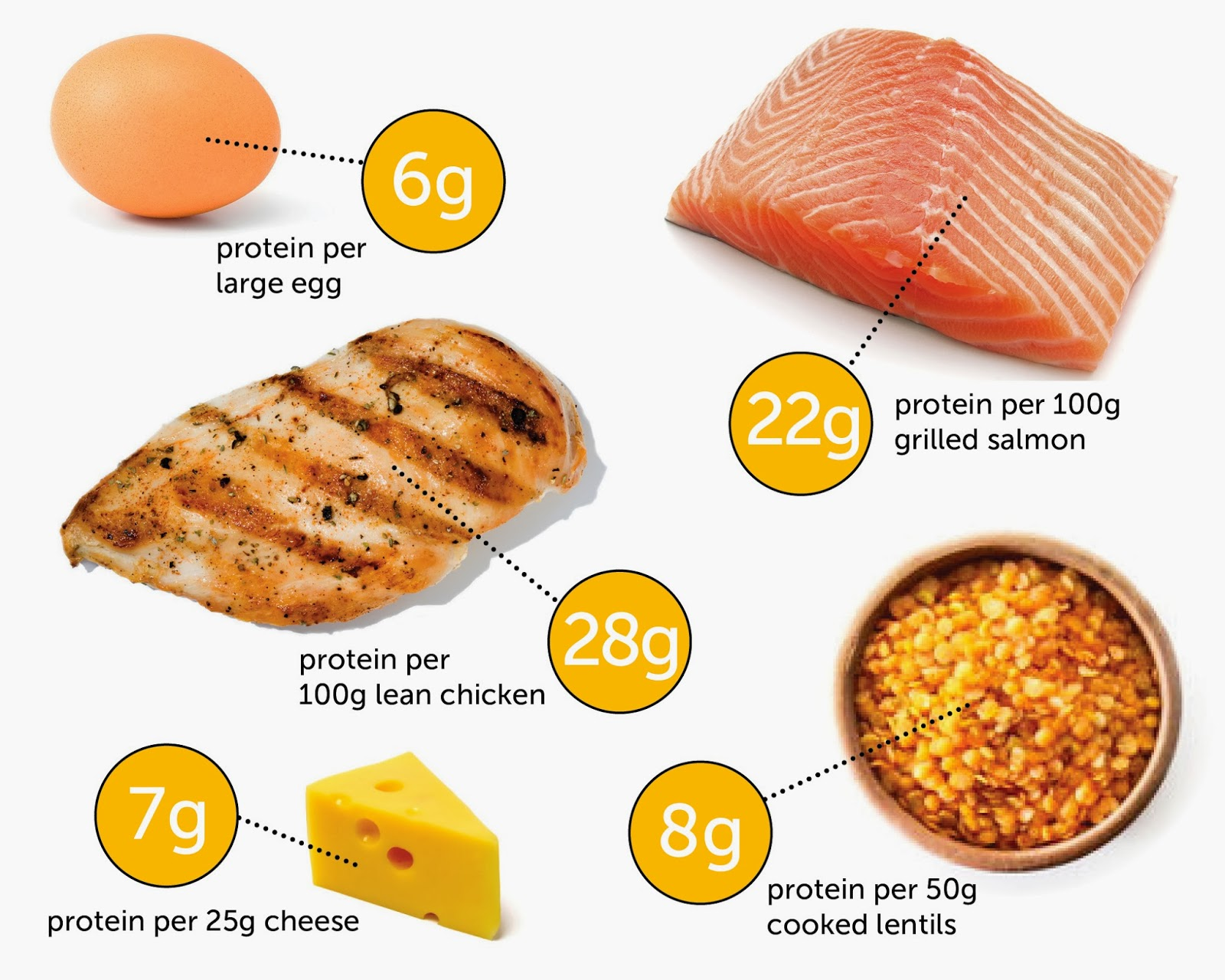 Foods Containing High Quality Protein