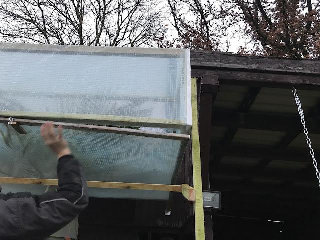 Winterschutz für Hanfpalme im Kübel