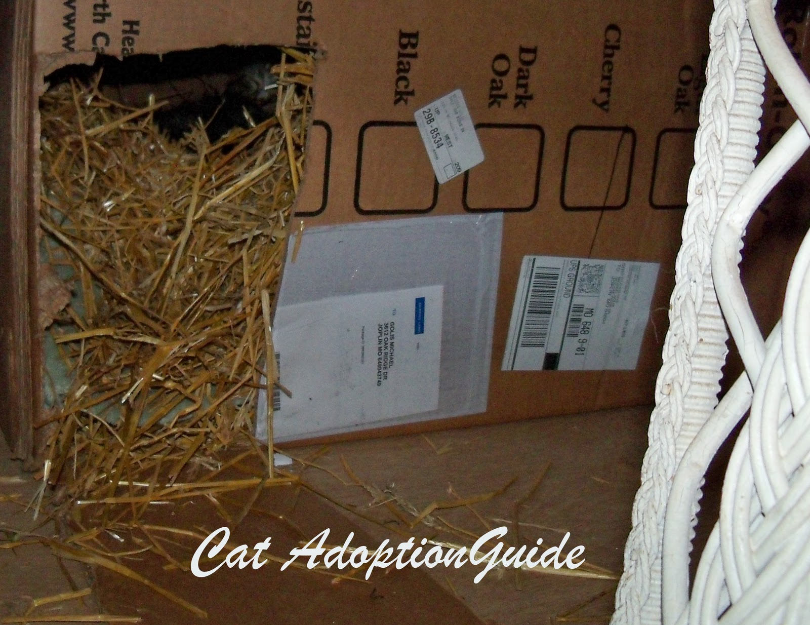 Cat Adoption Guide How To Keep Feral Cats Warm In Winter