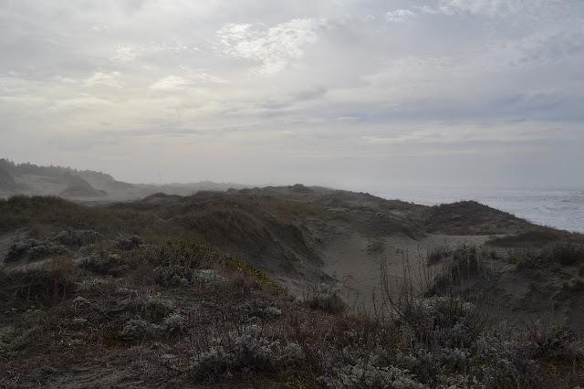 sandy sand dunes