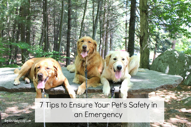 tips to ensure your pet's safety in an emergency #petprepared