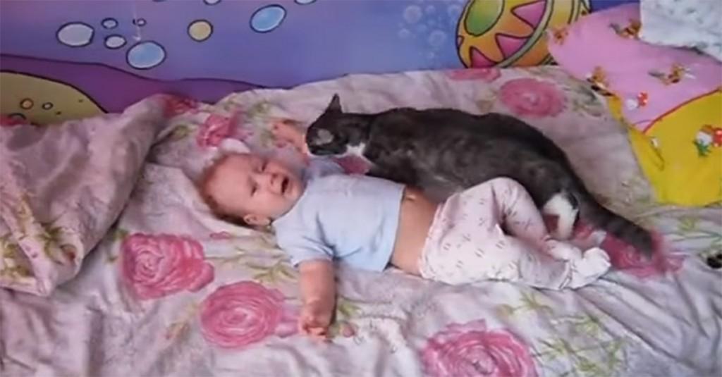 7bcb2f4f6e71 Δεν θα πιστεύετε τι έκανε αυτή η γάτα
