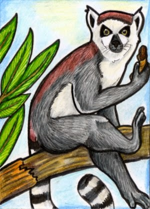 Ringtailed Lemur Illustration by Angela Oliver