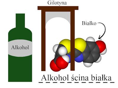 butelka, białko, biochemia, gilotyna, chemia, wpływ alkoholu na zdrowie