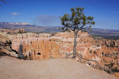 Tree on Cliff Side in Bryce Canyon National Park, Utah.