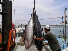 Kendala Operasional Rawai Tuna