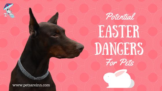 easter pet dangers