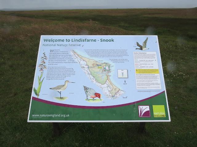 Lindisfarne Snook