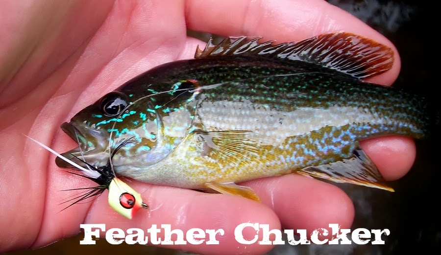 Picture of shiny bream!