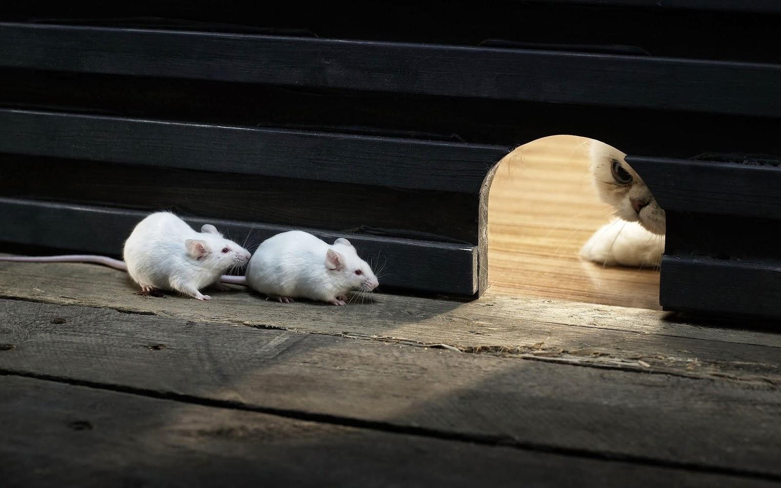Grappige achtergrond met kat en twee muizen