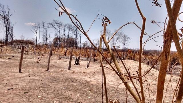 Incêndio florestal atingiu plantações e mata nativa na região de Caxias-MA. Imagem: Agência de Notícias Maranhão