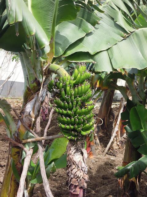 roślinność na Maderze