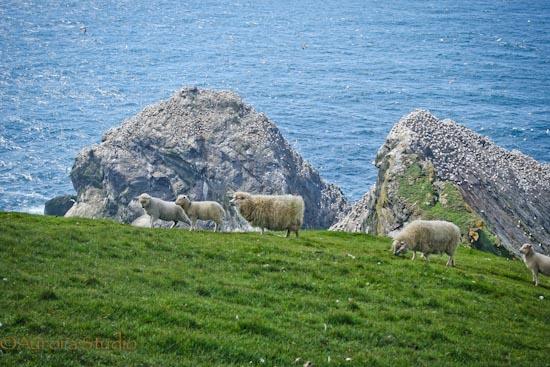 イギリス、シェトランド島の最北端アンスト島(ウンスト島)の風景