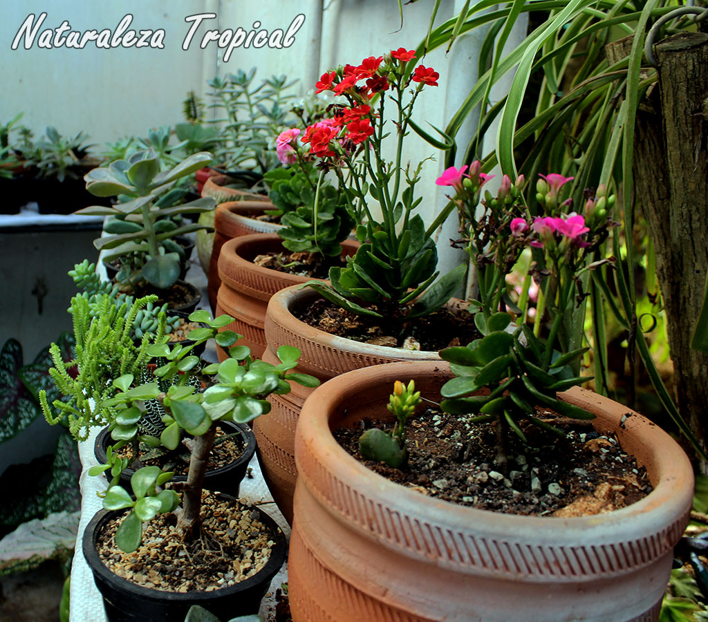 naturaleza tropical 10 consejos para el cultivo en macetas