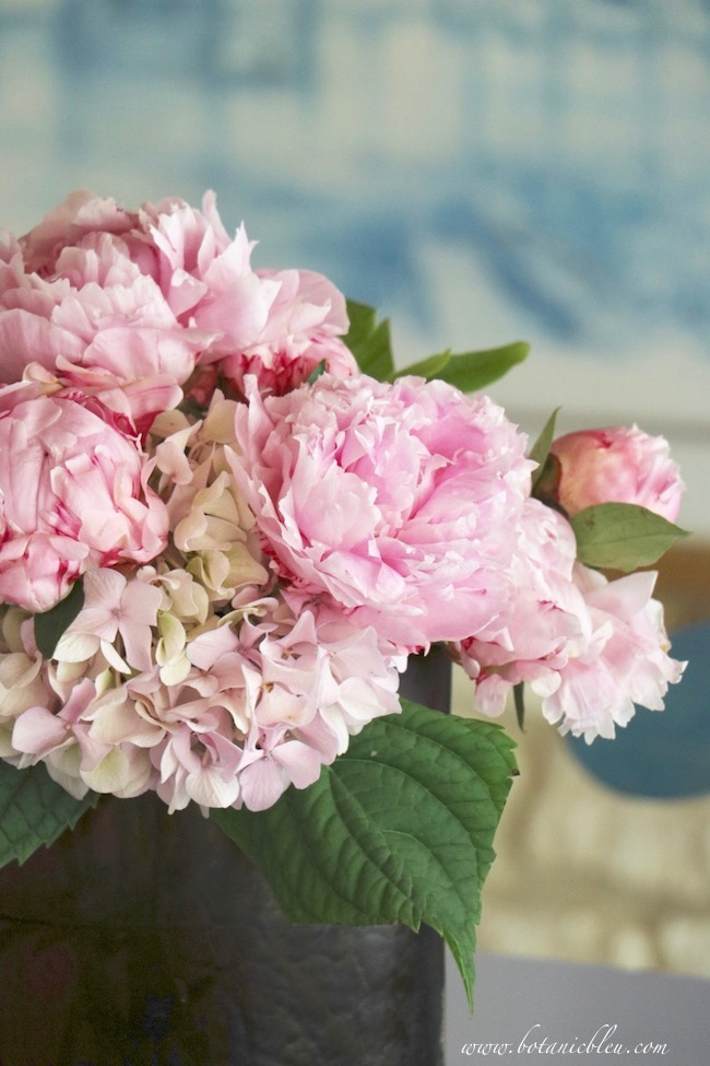 Modern day sources provide information for people under the peony spell